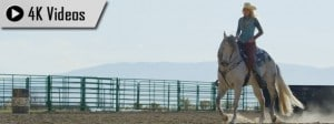 4K Video Horses
