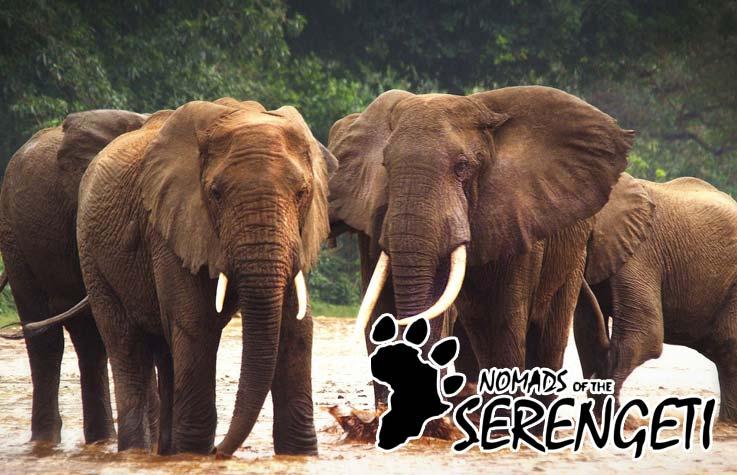 Nomaden der Serengeti