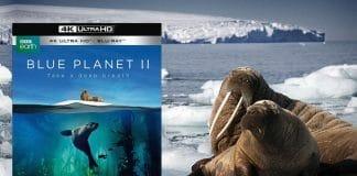 """""""Unser blauer Planet 2"""" soll Oster 2018 auf 4K UHD Blu-ray in den Handel kommen"""