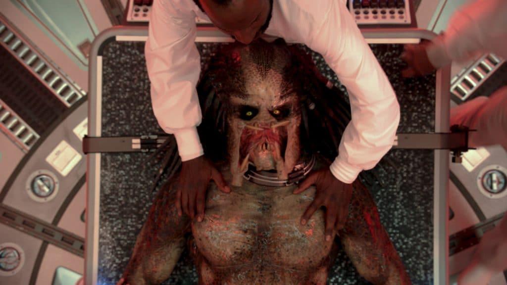 Wie intelligent kann es sein einen scheinbar toten Predator untersuchen zu wollen?