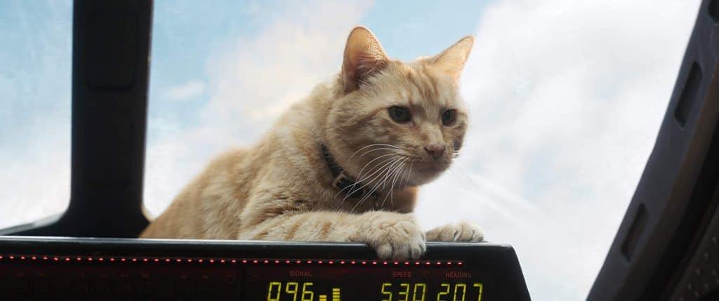 OooooH! Eine Katze spielt in Captain Marvel eine Nebenrolle!