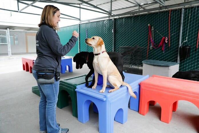 Jahrelanges Training ermöglicht Blindenhunden ihren Besitzern in allen Lebenssituationen zu helfen: (Bild: The Walt Disney Company)